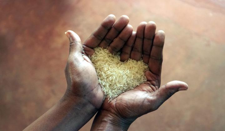 Riisinjyvät sydämen muodossa kämmenillä.