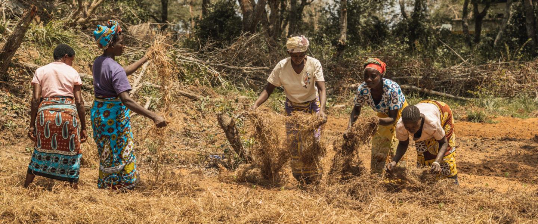 Naiset pellolla töissä.